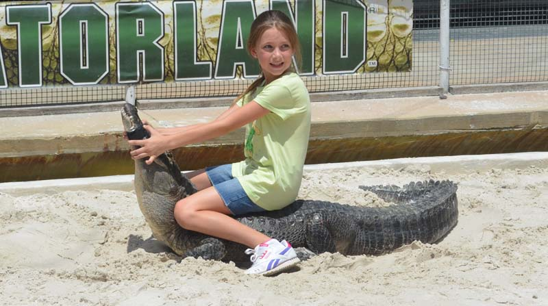 Amber Griswold wrestles a gator